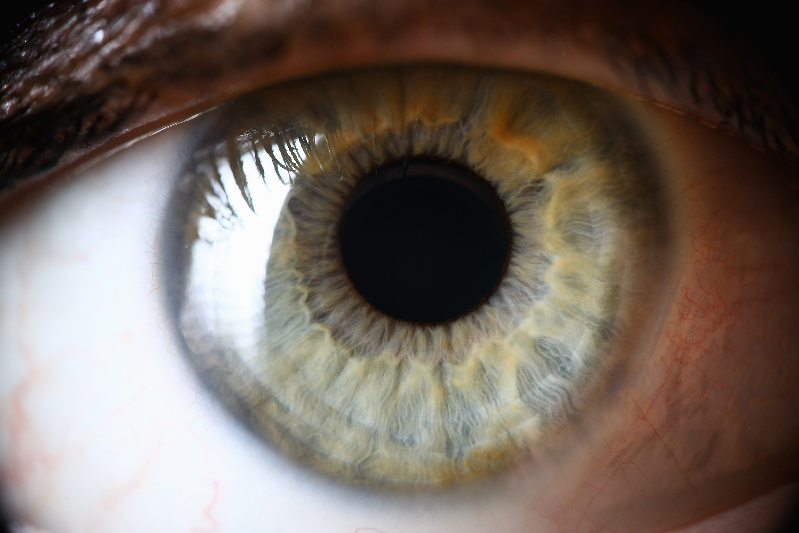 Close up picture of green eye. EMDR therapy in Detroit, MI can help you overcome traumas, anxiety, depression, grief, and more. Talk with an EMDR therapy at our online therapy practice or at our in-person office to see if this is a good fit for you. Call now and find EMDR therapy near you!